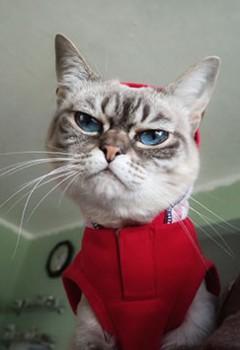 Sauerkraut Kitty