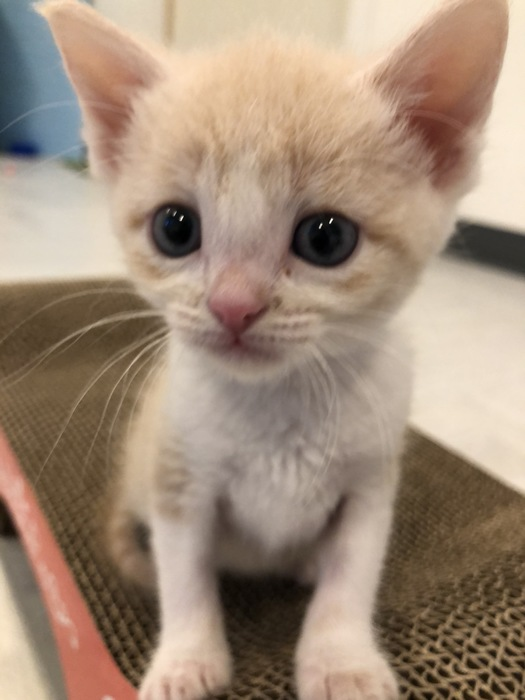 Kitten Faces