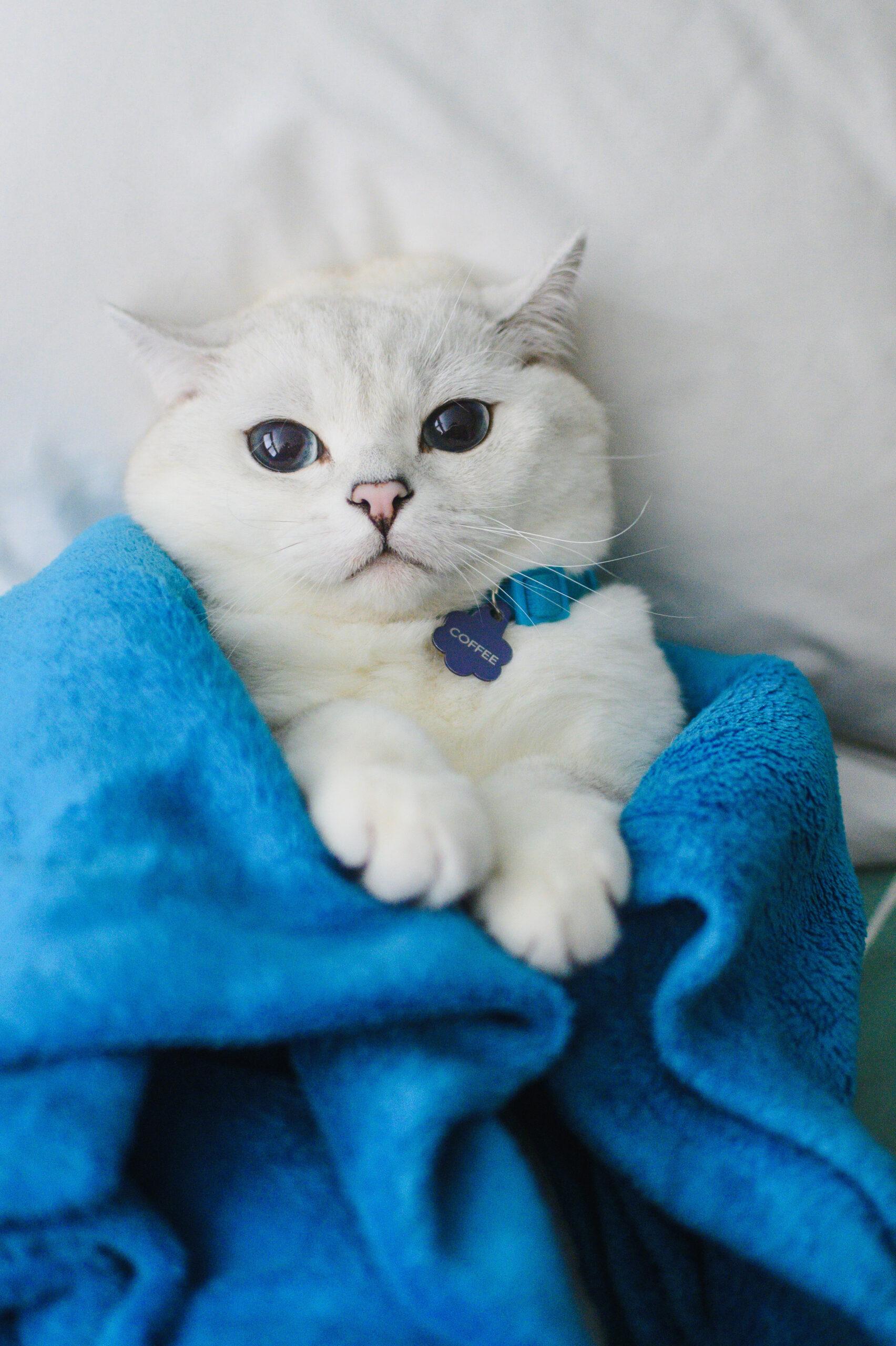 White Coffee Cat