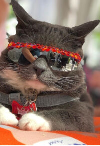 Sunglass Cat