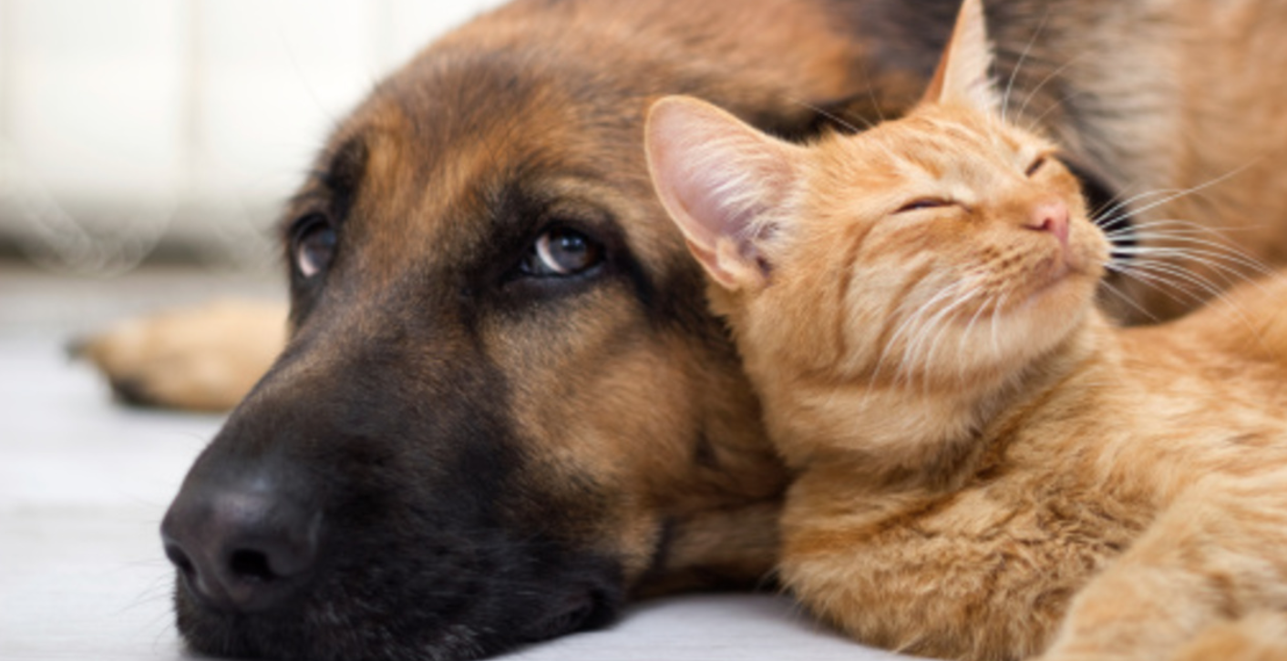 Planning for Pet Safety