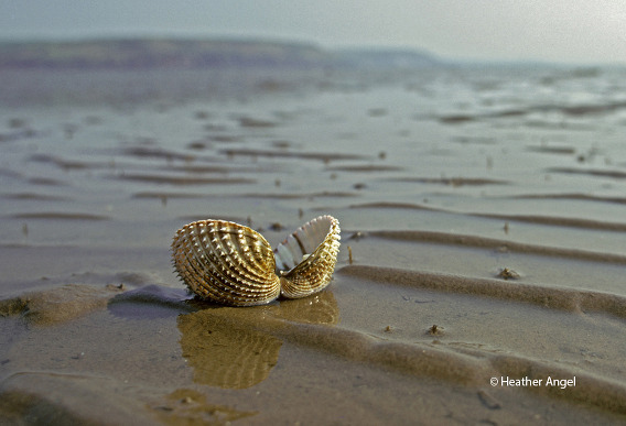 Crouching low with a wide angle lens, simulates a crab
