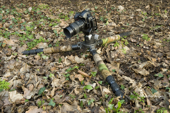 Gitzo tripods without a centre column can be speedily collapsed down to ground level. This one is fitted with camouflage leg warmers.