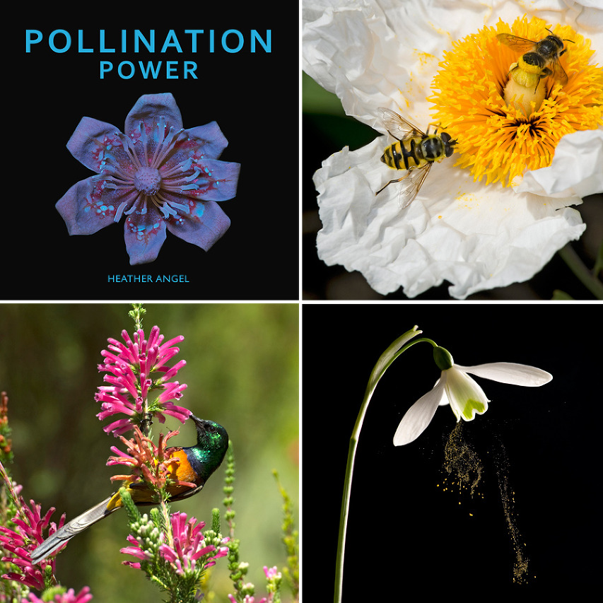 01 Pollination Power Heather Angel