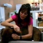 The Pack Mom's Grooming Tips- Quick and Clean Dog Ears