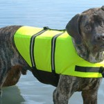 Life Jackets for Water Dogs?