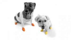Pawz - Dog Paw Protection