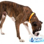 H2Fido- the Portable Pooch Hydrator