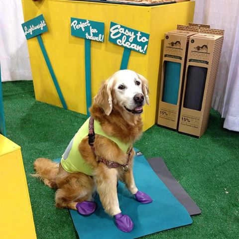 yoga mat for dogs