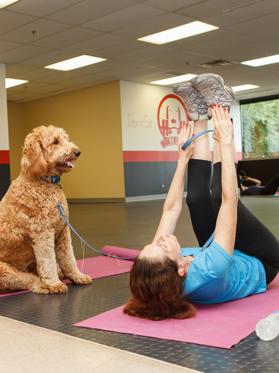 dog human workout