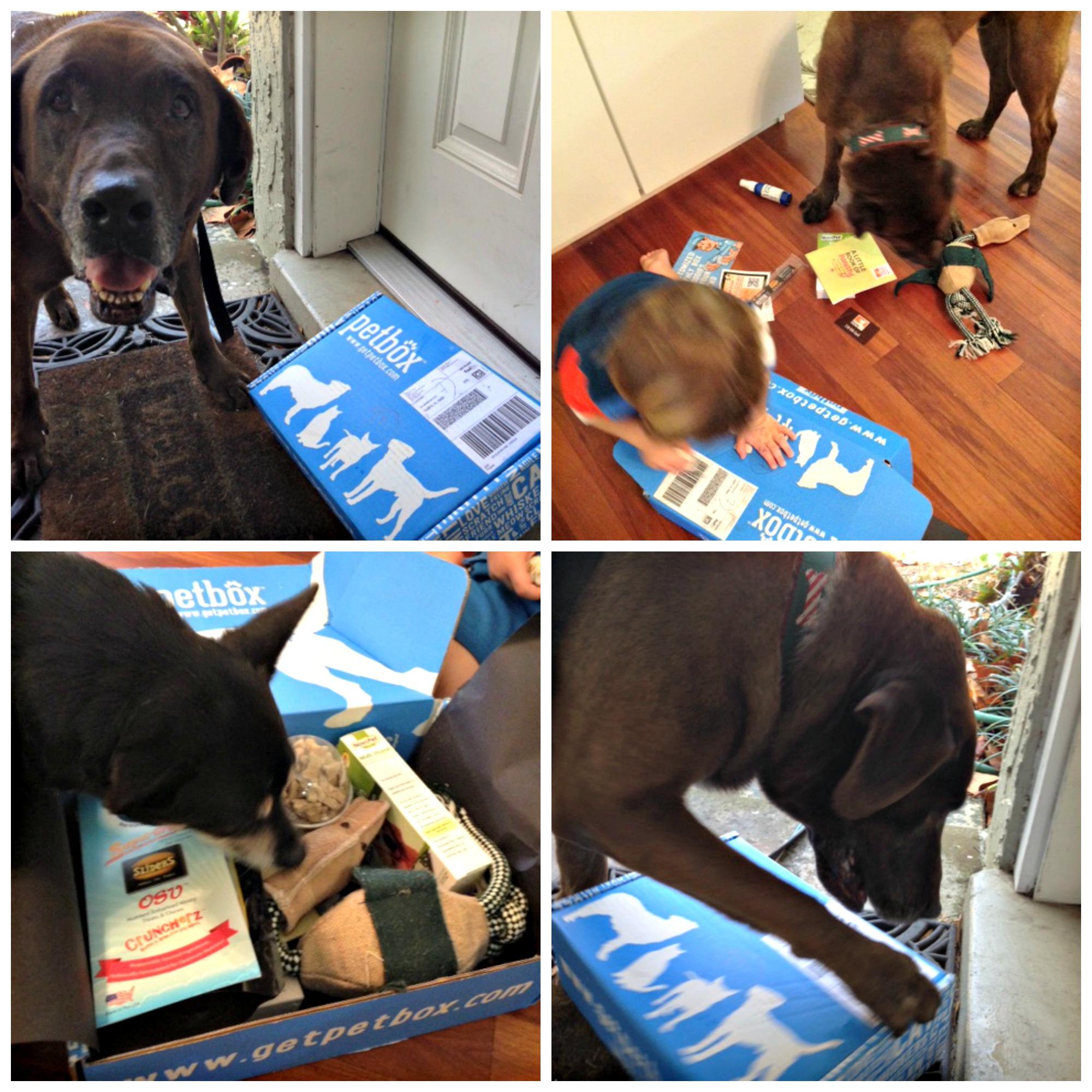 pet box collage