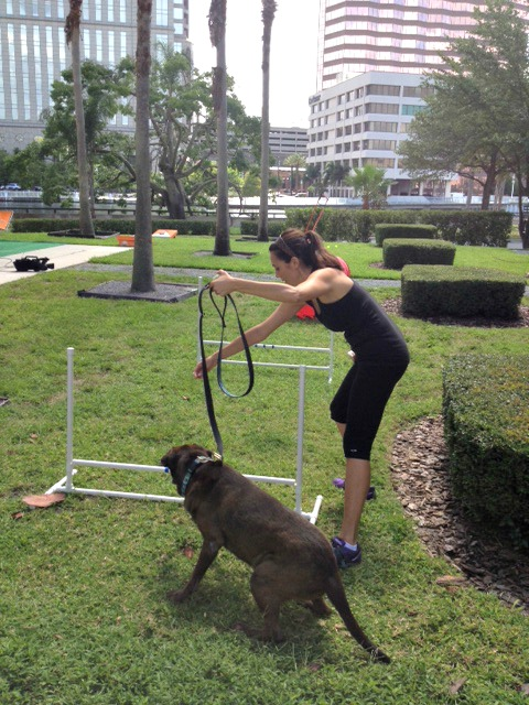 Start by using a leash and desirable treats to train the course