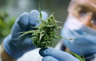 About Precision Plant Molecule