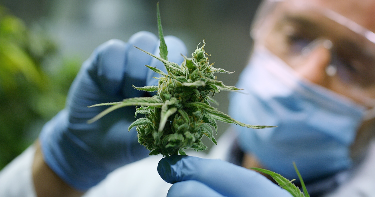 Five Cutting-Edge Cannabinoid Production Methods to Watch