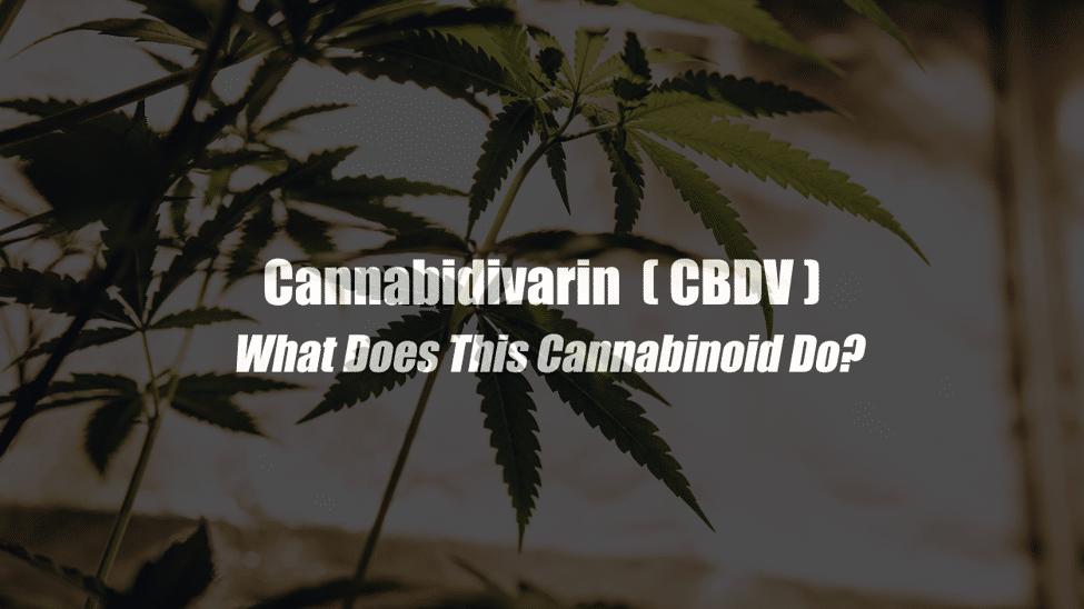Varin Cannabinoids (THCV, CBDV and others)