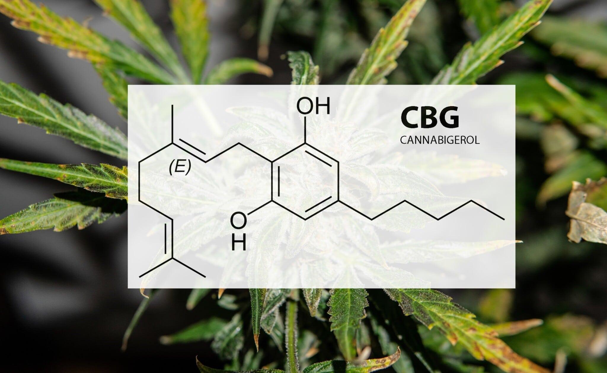 CBG (Cannabigerol)