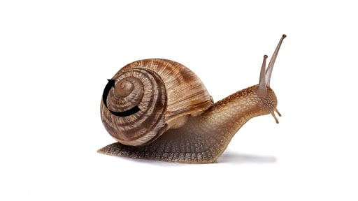 """CBC is an Ambidextrous Phytocannabinoid. Might it be the Next """"It"""" Cannabinoid? What do snails have to do with CBC?"""