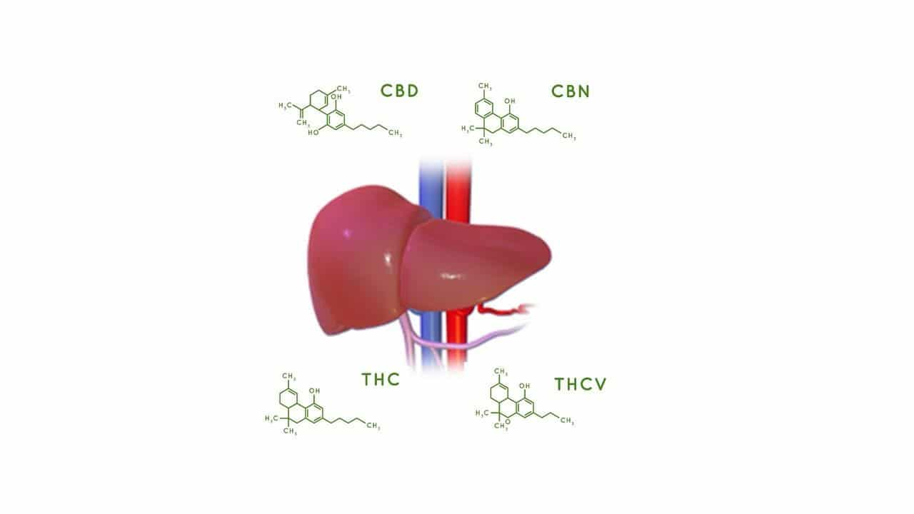 Part ll: PK and PD Curves Really Matter with Cannabinoids: CBD, CBC, CBN and THCV