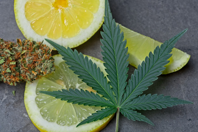 Terpenes The Little-Known Compounds That Make Cannabis a Better Medicine