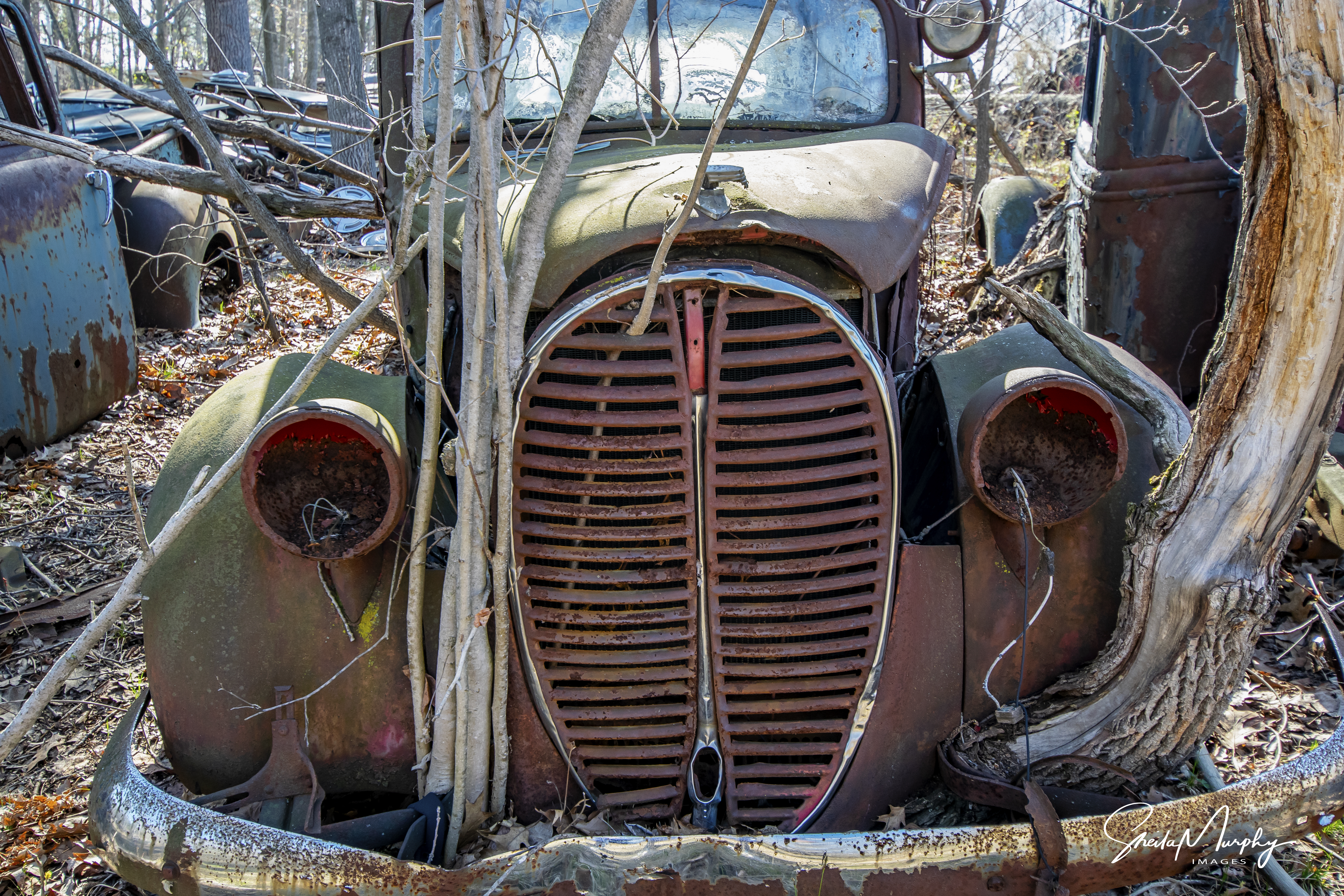 Finding Beauty in the Junkyard… a Gallery by Sheila Murphy