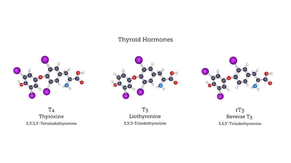 How Reverse T3 Affects Thyroid Under Conversion | Total Health Center VB
