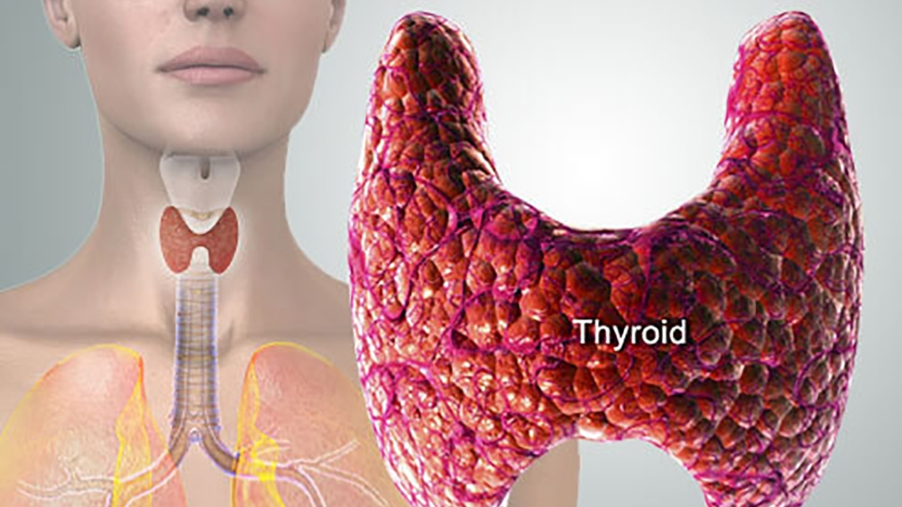 Thyroid Hormones and Alternative Treatments for Thyroid Conditions
