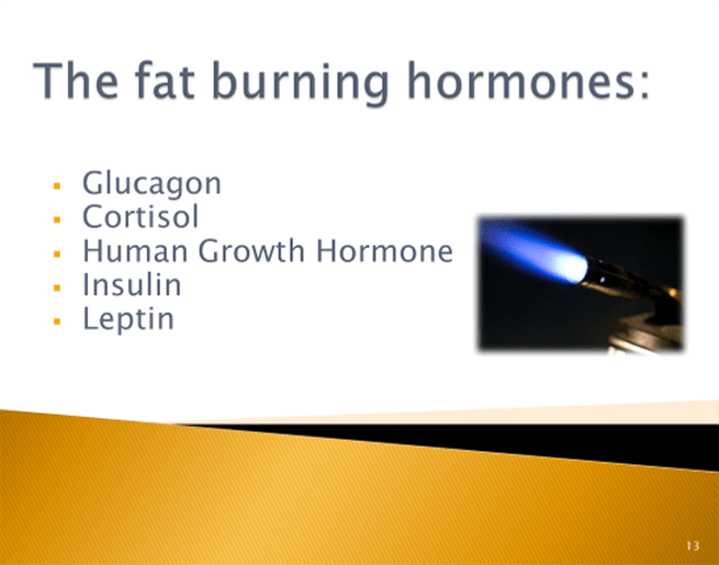 Hormones and Weight Loss - Fat Burning Hormones