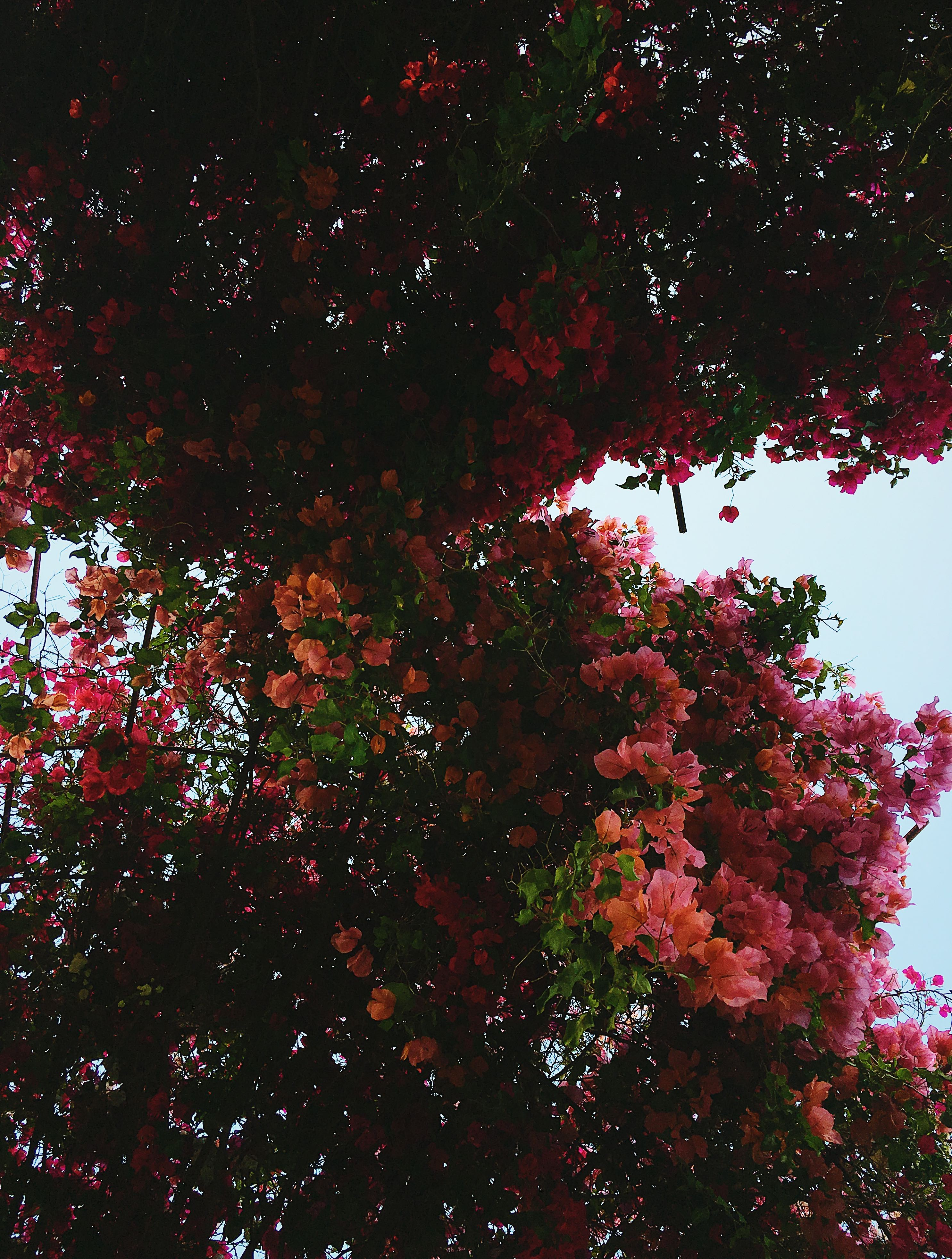 getty museum-flowertree-LCM-LiveClothesMinded