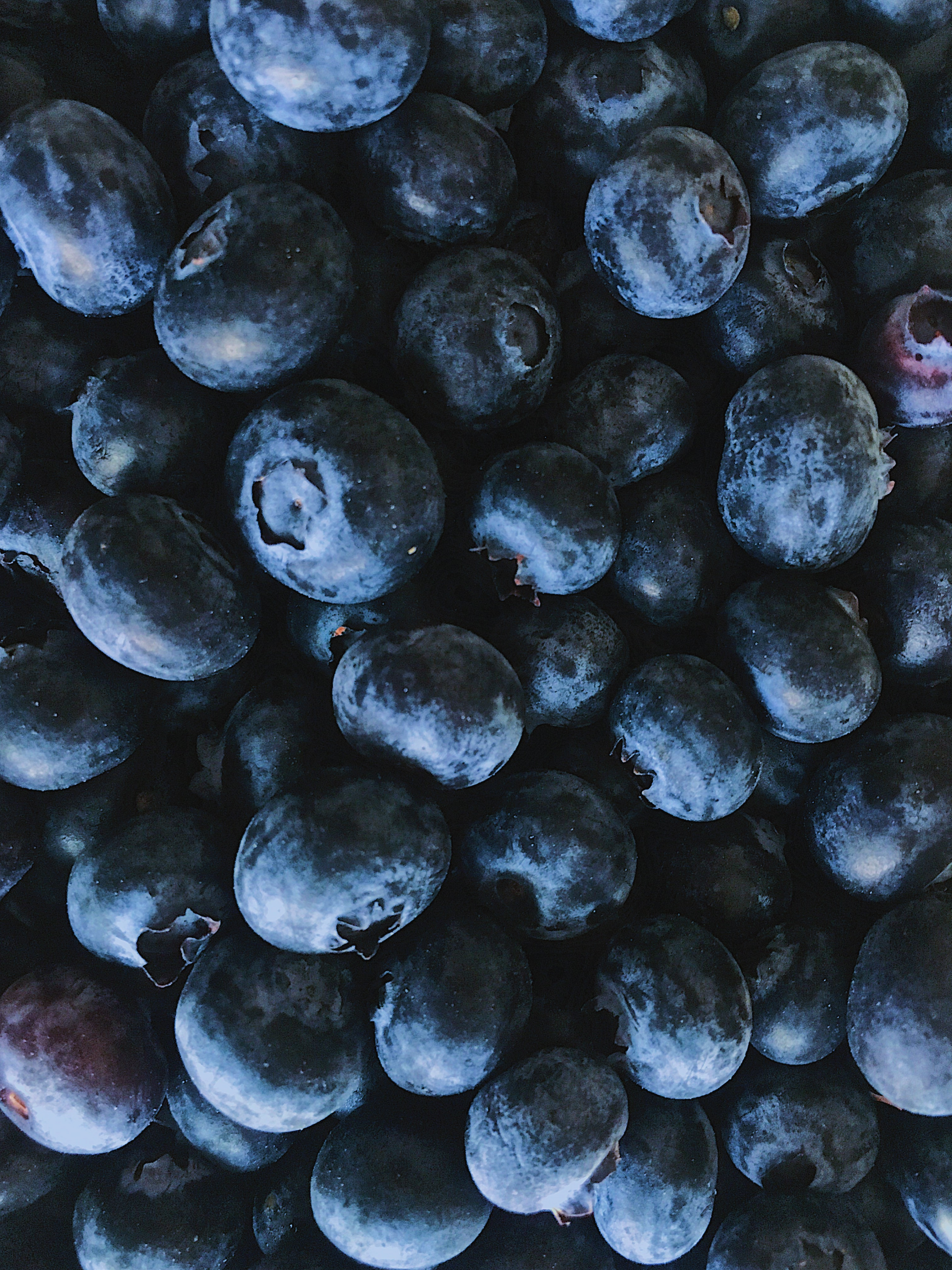close up image of blueberries