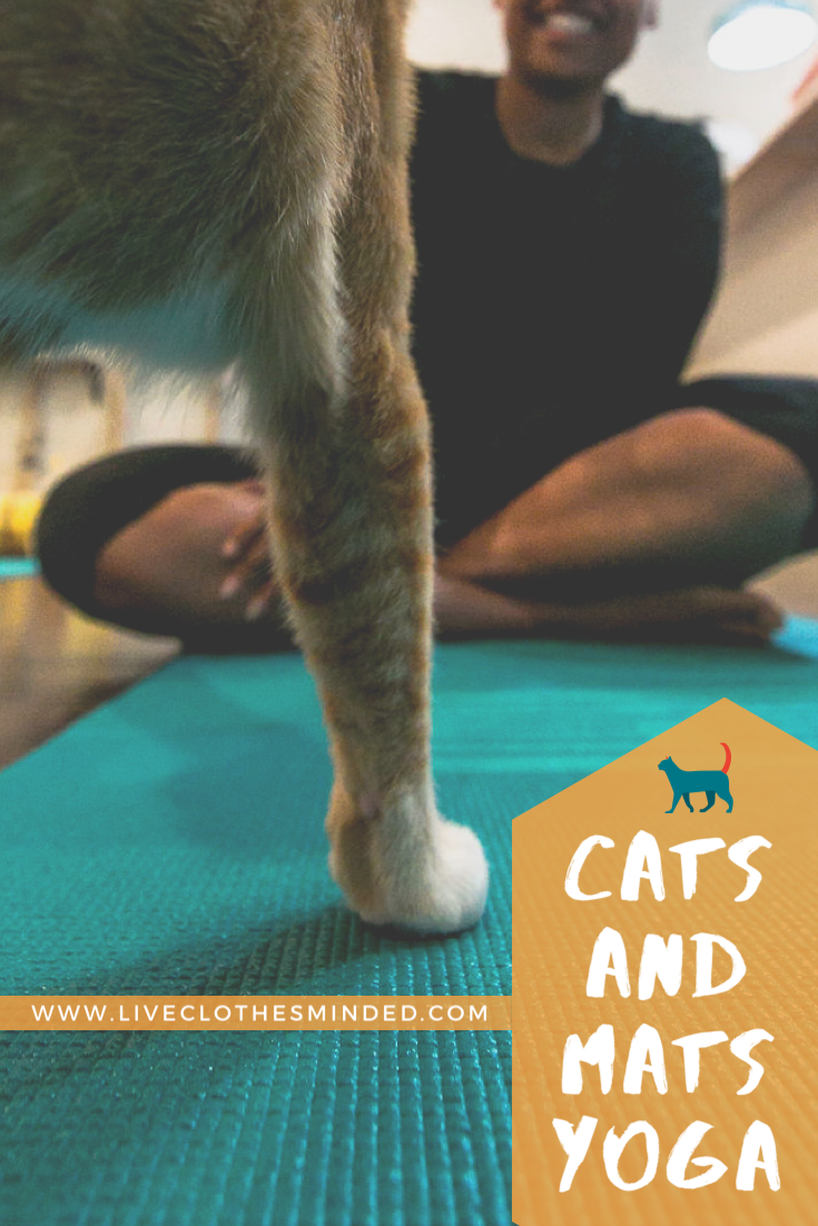 cats & mats yoga-feline good social club-long beach-liveclothesminded