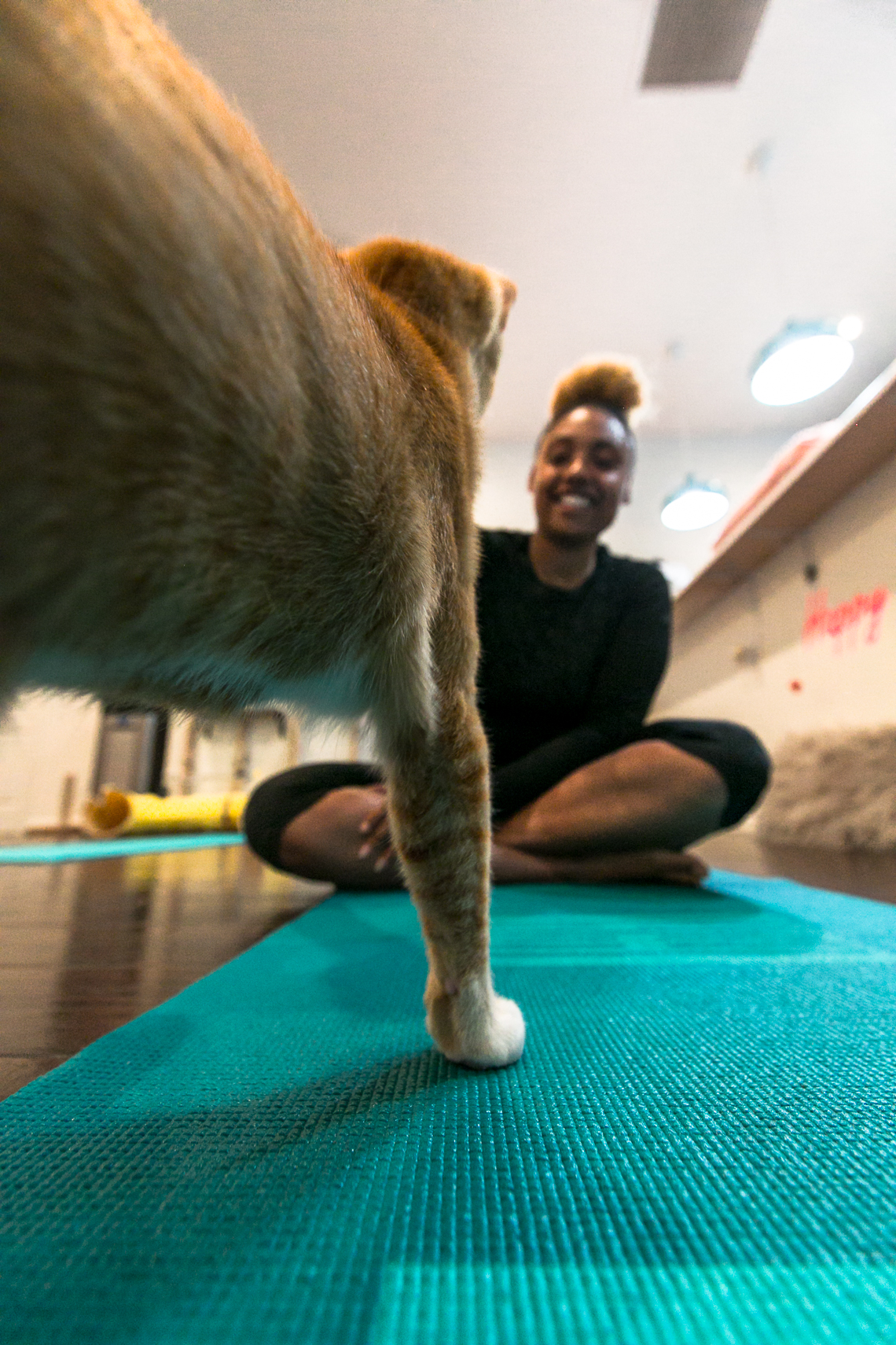 cats & mats yoga-feline good social club-lcm-xmmtt