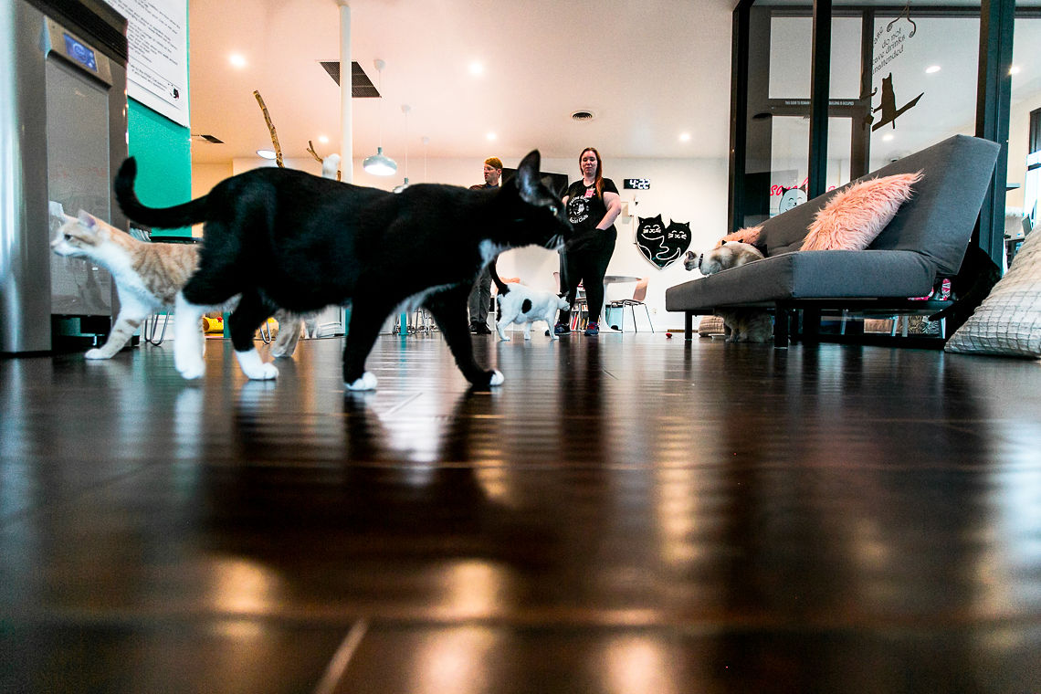 cats & mats yoga-rsee-xmmtt-feline good social club-long beach
