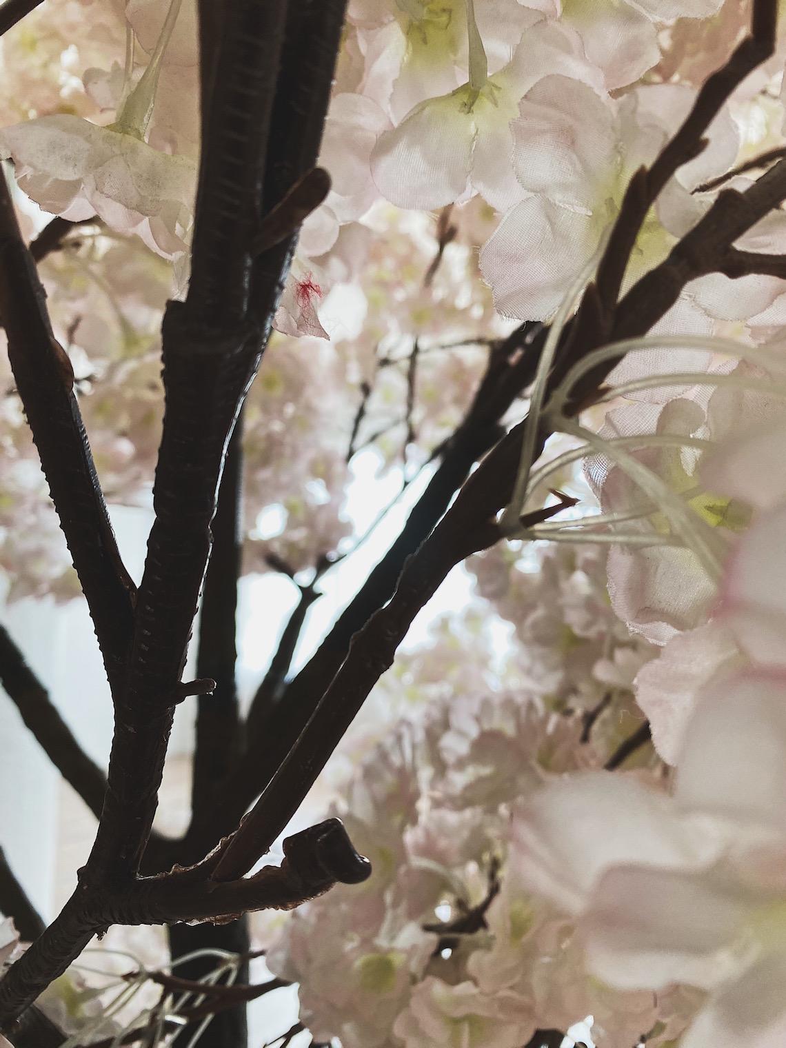 blossom tree-fd photo studio