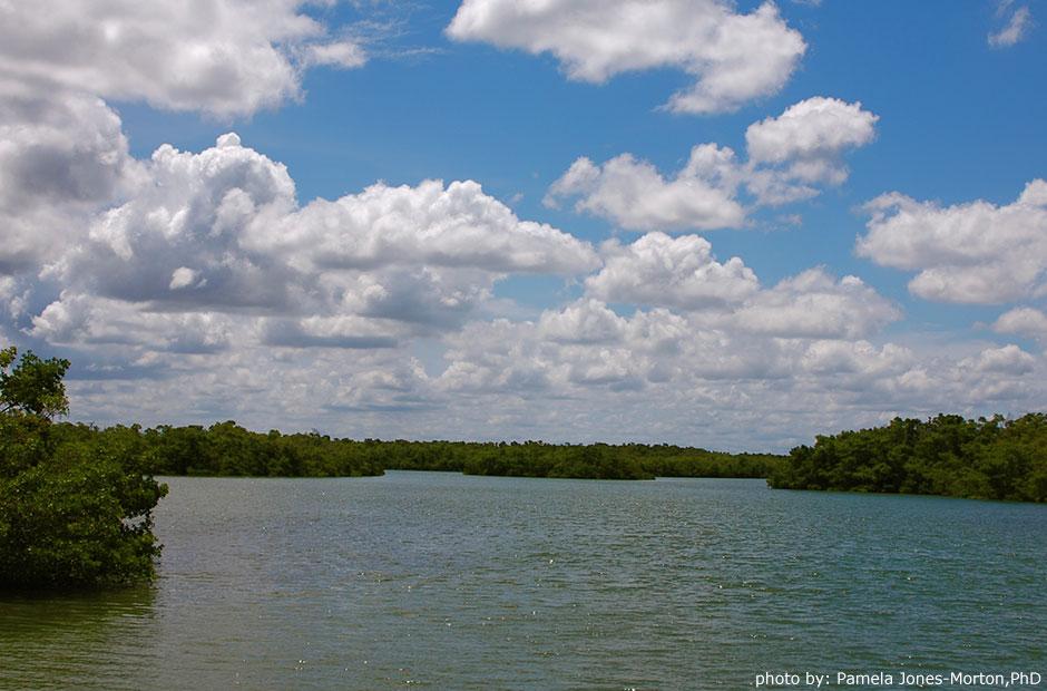 Lovers Key State Park estuary photo: Pamela Jones-Morton