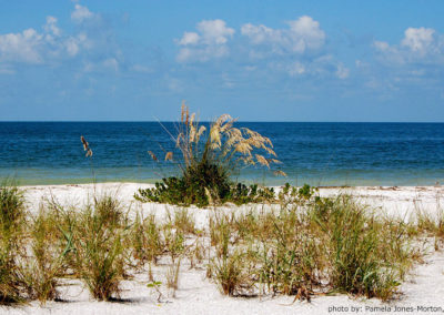 gallery-sea-oats-at-Lovers-Key-State-Park-v2