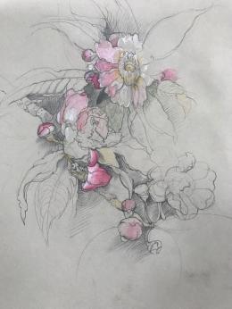<h5>Persian Wild Roses</h5><p>Pencil  15 x 12  1983</p>