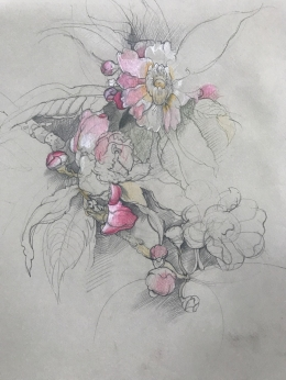 <h5>Persian Wild Roses</h5><p>Pencil on paper 15 x 12  1983																	</p>