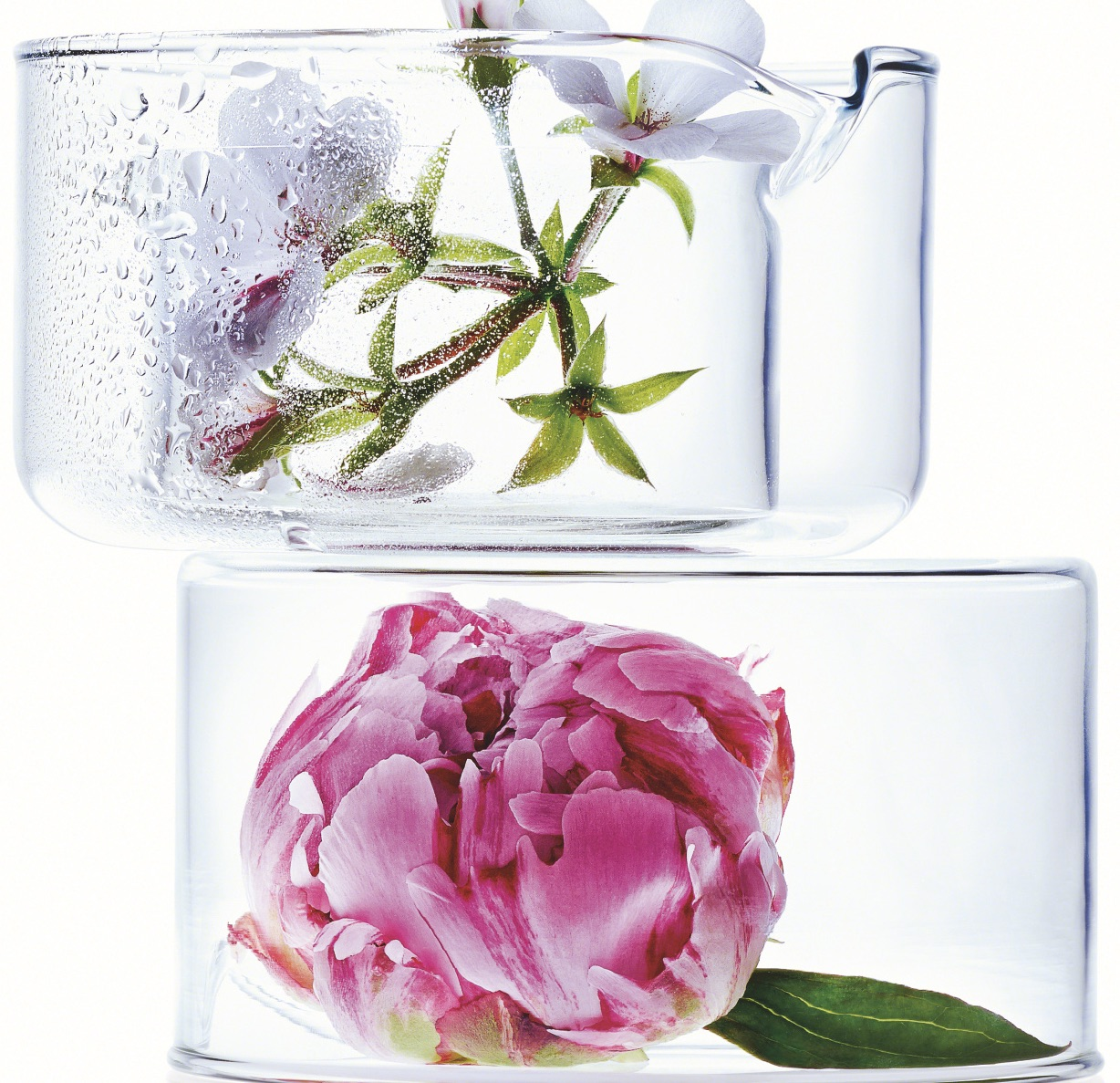 Rose Blossom Revitalizing Care By Annemarie Borlind