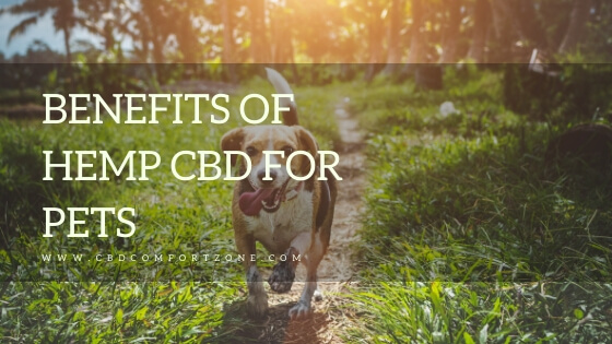 Hemp CBD for pets cbd comfort zone