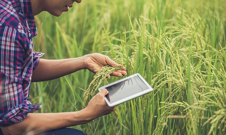 Agribusiness precisa de sustentabilidade e tecnologia