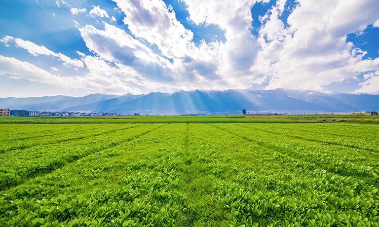 Tecnologia agrícola é fundamental para economia