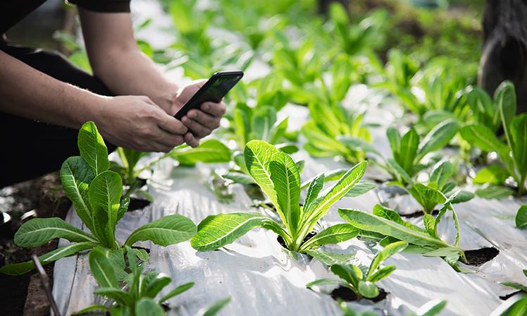 Machine learning auxilia agronegócio