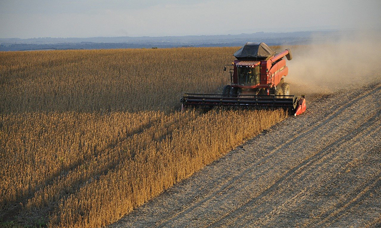 Setor agropecuário resiste à crise