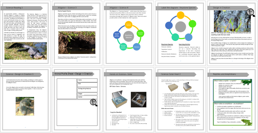 Alligator Unit Study pic 2