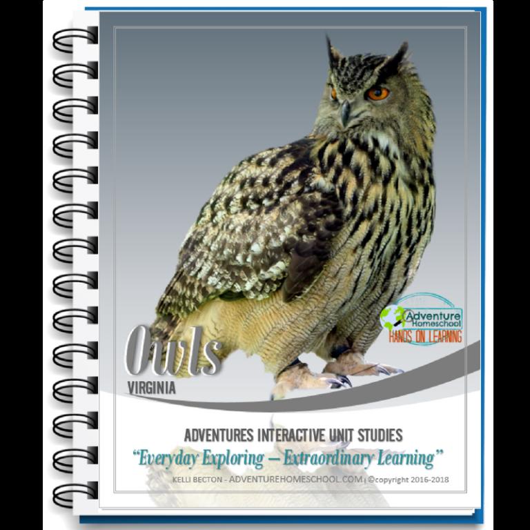 Owl Unit Study