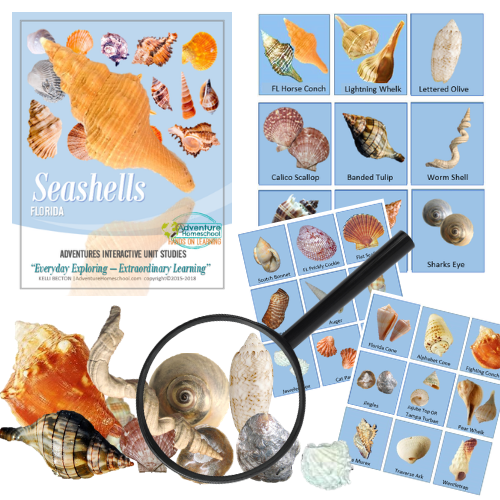 Seashell Kit