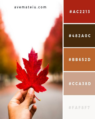 fall color pallette reds