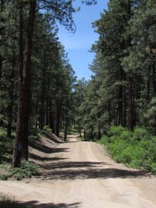 Ponderosa pine and Gambel oak forest