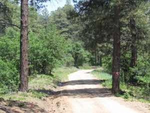 Road in Timberdale Ranch