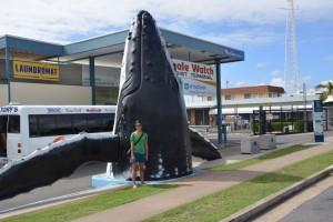 alissa-whale